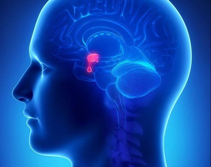 L'ipotalamo: regolatore del sistema nervoso autonomo, memoria e invecchiamento